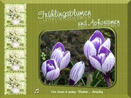 Aphorismen und Fruhlingsblumen