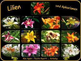 Aphorismen und Lilien