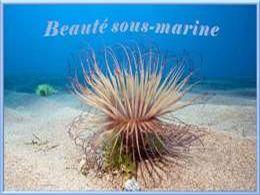 Beauté sous marine
