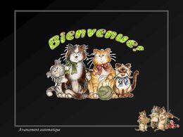 Bienvenue les chats