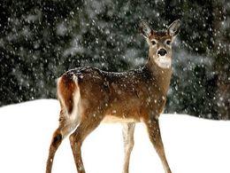 PPS la neige