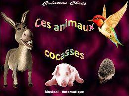 Diaporama Ces animaux cocasses