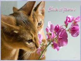 PPS Chats et fleurs 2