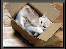 Des chats planqués dans des cartons