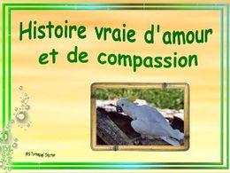 Histoire vraie d'amour et de compassion