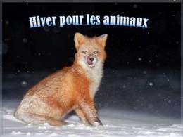 Hiver pour les animaux