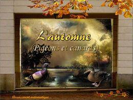 PPS L'automne pigeons et canards