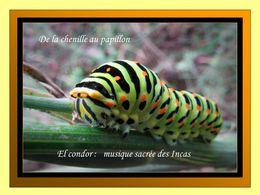 PPS L'envol du papillon