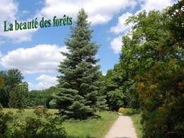 La beauté des forêts