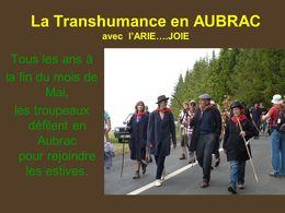 La transhumance en Aubrac