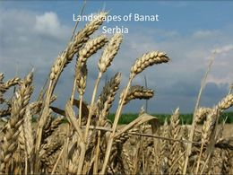Landscapes of Banat