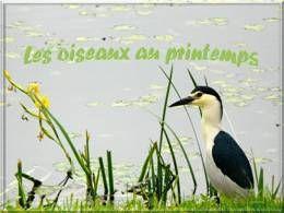 Les oiseaux au printemps