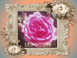 Diaporama sur Les roses