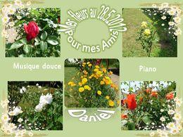 Mes fleurs du moment - Ma passion