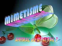Mimétisme animal ou minéral