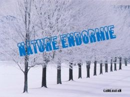 Nature endormie