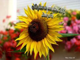 PPS Nos fleurs au mois d'Aout 2012 2ème partie