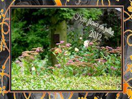 Diaporama Nos fleurs en juillet 2012