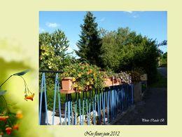 Nos fleurs Juin 2012
