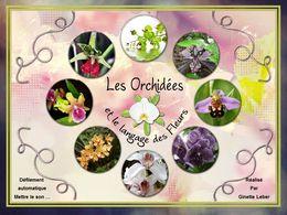 langage des fleurs: orchidées