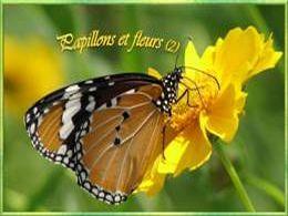 Papillons et fleurs 2
