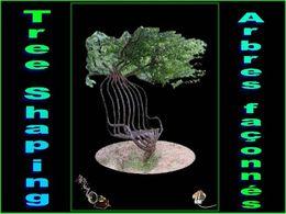 Pooktre tree shaping arbres faconnés