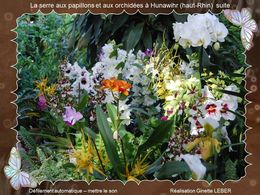 Jardins des Papillons à Hunawihr N°2