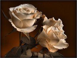 PPS Roses de Corfou