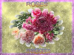 Roses enneigées