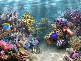 PPS Sous la mer