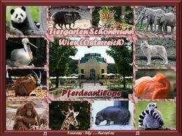 Tiergarten Schönbrunn Pferdeantilope