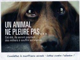Un animal ne pleure pas et pourtant