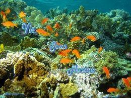 PPS sur la vie sous marine
