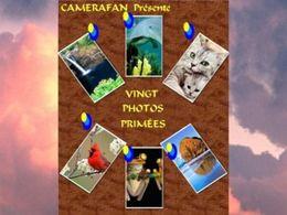 Vingt photos primées